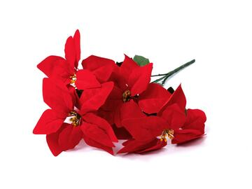 Poinsettia 5 fiori, 45 cm