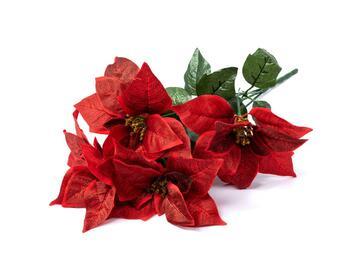 Poinsettia 5 fiori soft, 50 cm