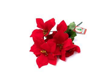 Poinsettia 7 fiori