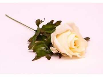 Fiore rosa bianca, artificiale, da decorazione.